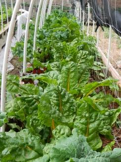 Grow beds 6. july 2014 (2)