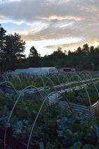 Farm 2016