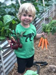 Arlo beets and carrots 2018