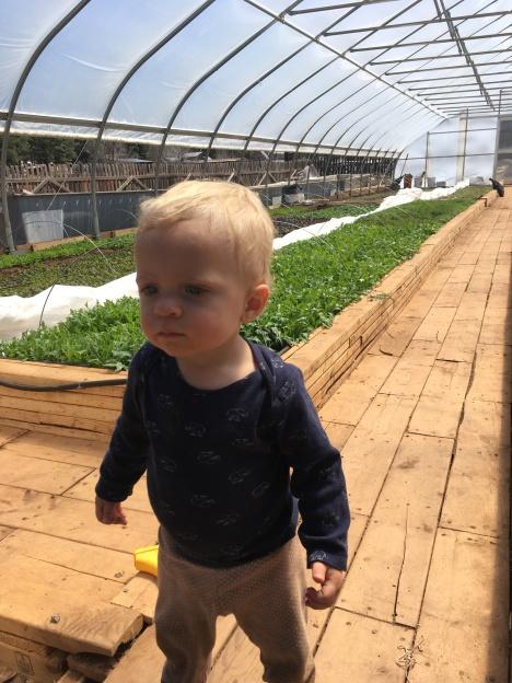 erez greenhouse 2019