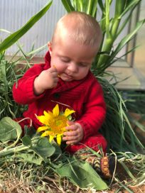 Erez sunflower 2018