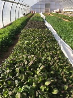 greens greenhouse 2019